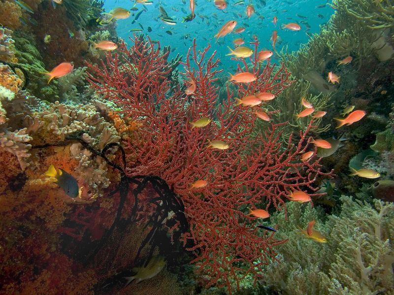 Reef scene_0086_72dpi copy