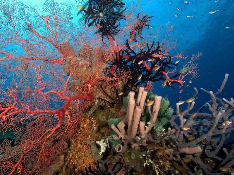 Reef scene_0001_72dpi copy