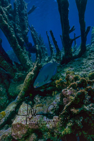 Parrotfish Exploring