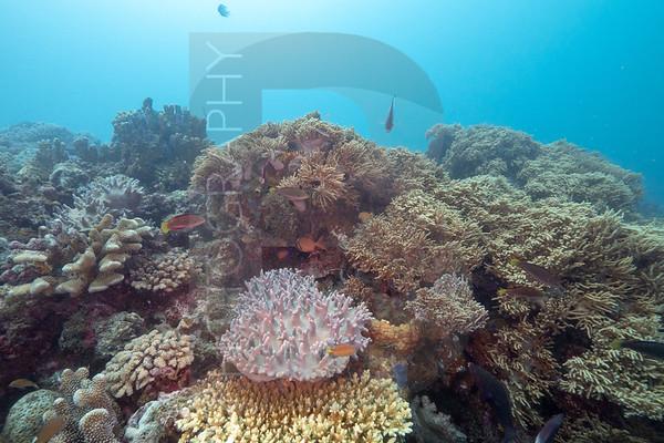 Papua New Guinea Reefscape