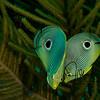 Cayman Love
