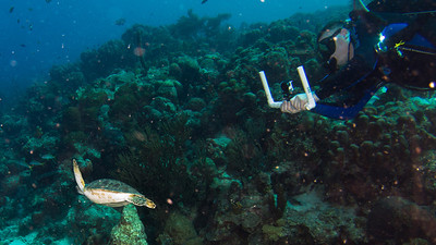 David Hinsvark and Hawksbill Turtle