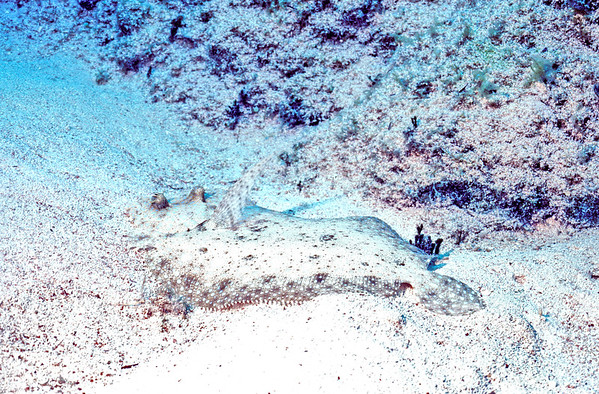 Image 2U79