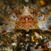 Crab Eyes Up Close