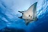 Socorro Islands Underwater