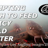 Video thumbnail for 'Tempting Fish To Feed In Icy Cold Water'.