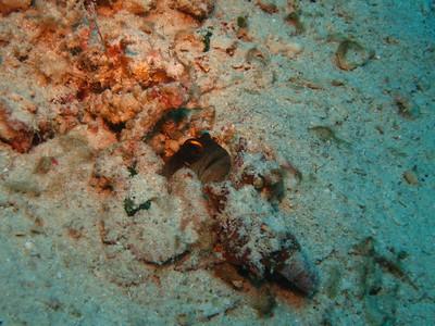2005-09-18~23::Dumaguete, Philippines