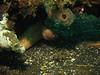 mooray eel