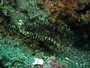 seaworm