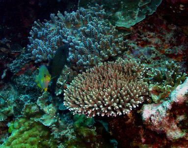 Coral Garden: DSC02161