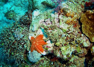 Coral Garden: DSC02162: spectacular star