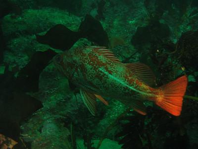 2007-07-04::Monterey, California