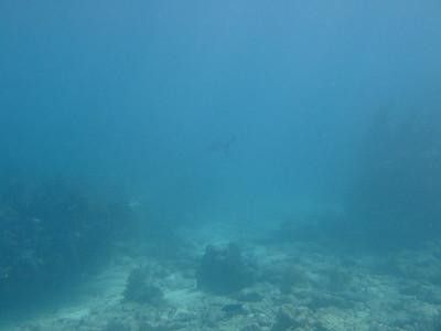 2007-10-17 Key Largo Diving