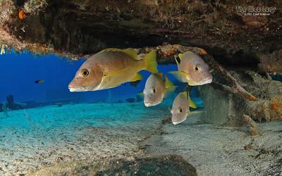 2007 Grand Cayman