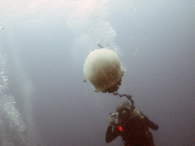 The Professor photographing the jellyfish