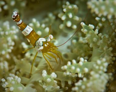 shrimp_DSC2956
