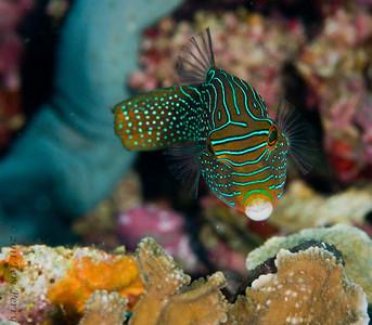 fish_DSC2681