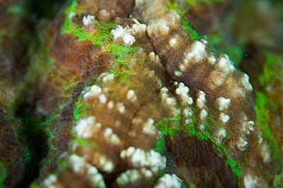 coral_DSC3531
