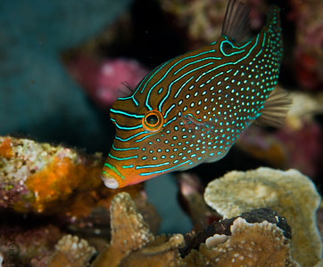 fish_DSC2682