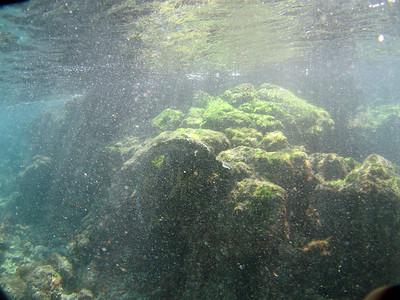 Second marine iguana, feeding (3 of 4)