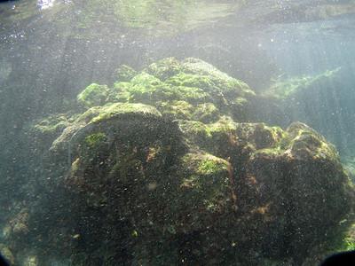 Second marine iguana, feeding (4 of 4)