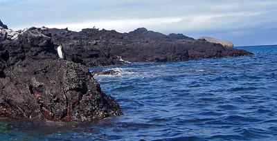 Spot the penguin (hint: not sub-aqua!)
