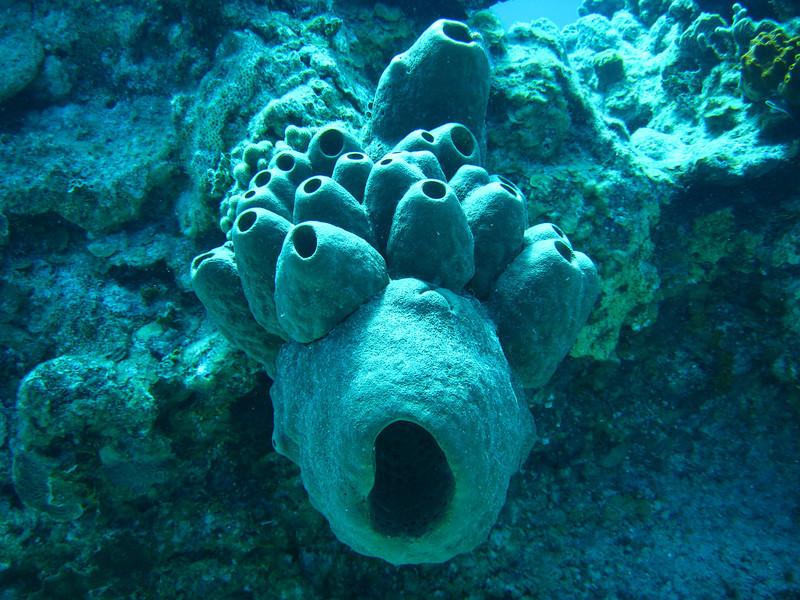 Wierd Sponge formation.