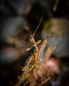 shrimp skeleton-4