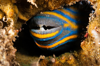 fish smiling in a cave-2