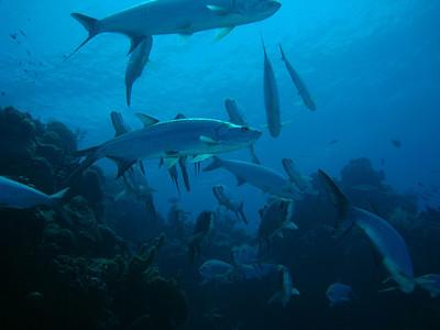 2012-03-Cayman Dives