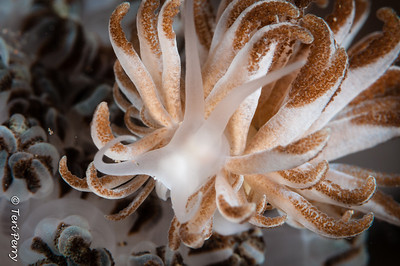 NUDIBRANCH - -9570