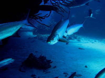 2013-03-Cayman Dives