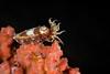 CEPHALOPOD - cuttlefish-8641-Edit-Edit