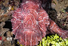 FISH - psychedelic frogfish -6822-Edit