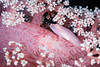 FISH - dendroneptha ghost goby (Pleurosicya blodinghi)-7841-Edit