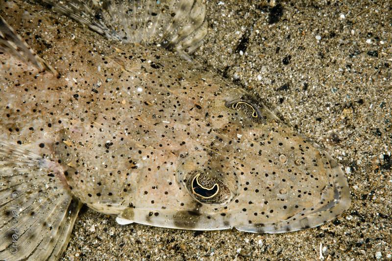 FISH - flathead6515