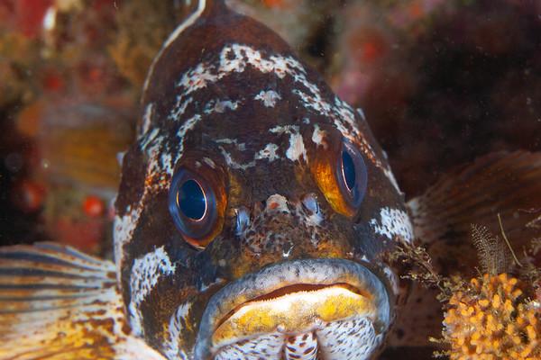 2018 Big Sur Underwater