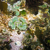 tide pool anemones<br /> Neah Bay, WA