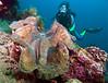 Giant Clam & Pepi