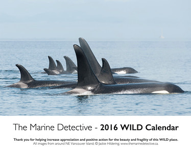 Cover page 2016 WILD Calendar