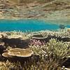 Matangi Reefscape, Fiji