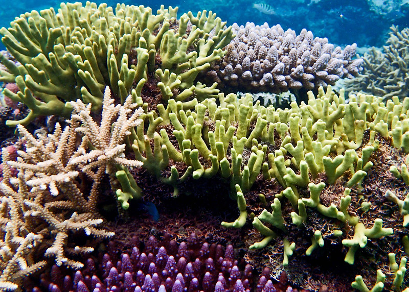 Colorful Reef, Matangi Island, Fiji