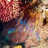Soft Coral, Matangi Island, Fiji