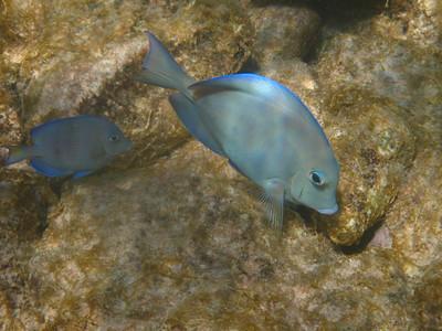Aruba underwater