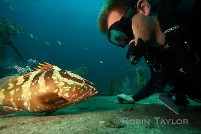 Self portrait with one bold Nassau Grouper