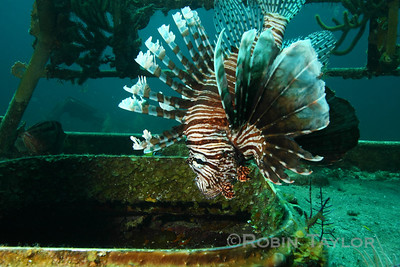 Lionfish at Edwin Williams