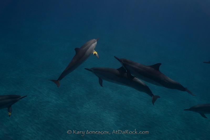 Dolphin leaf games