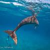 Hawaiian Spinner Dolphin, Nai'a