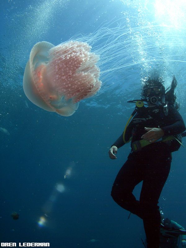 Diver and a Jellyfish
