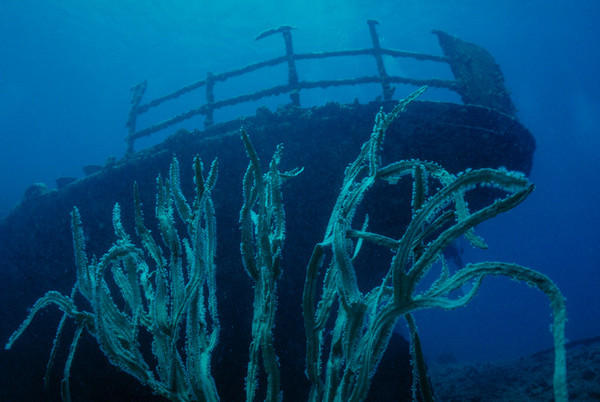 Stern of the wreck of the Cartanser Sr. Little Buck Island, USVI  2000 Alert Diver Magazine - November 2000 issue, story photo Divers Alert Network (DAN) http://www.diversalertnetwork.org/